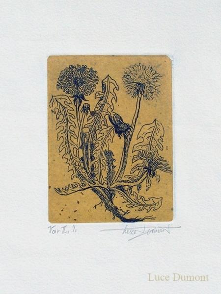 taraxacum-varII-web