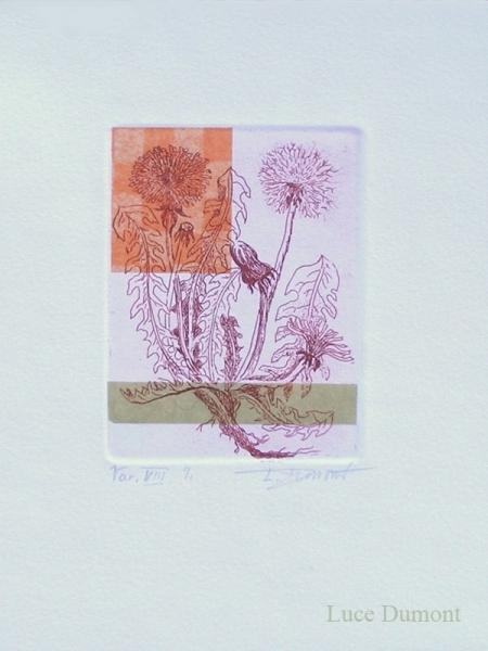 taraxacum-varVIII-web